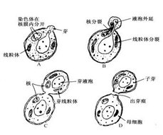 http://www.lshangjiu.com/uploads/101115/140302/1-14030219211U12.jpg