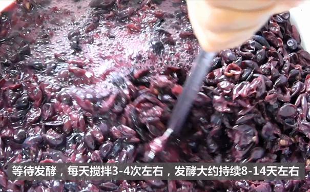 葡萄酒发酵